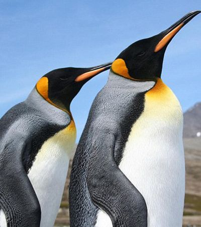 Aquecimento global: Maior colônia de pinguins do mundo perde 88% de sua população