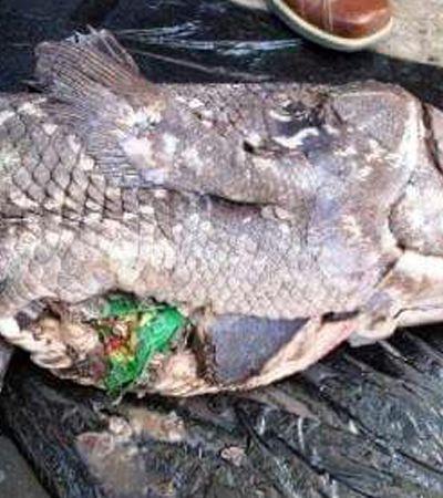 Embalagem de salgadinho é achada dentro de peixe jurássico que vive no fundo do oceano