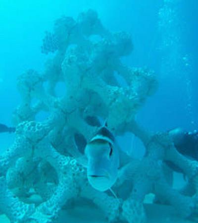 Maior recife do mundo é feito com impressão 3D para salvar biodiversidade das Maldivas