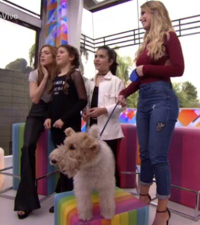 Atriz mirim diz que cão é anestesiado para gravar e é desmentida ao vivo, na Globo