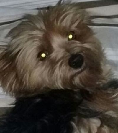 Funcionários do SAMU são demitidos depois de transportarem cachorro em ambulância