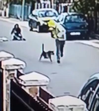 Vídeo mostra cachorro salvando mulher de assalto e viraliza