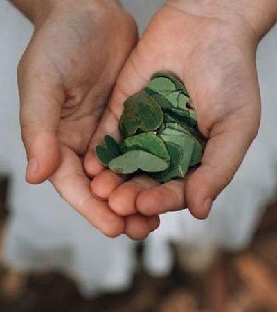 Como fazer confetes sustentáveis que não agridem o meio ambiente usando folhas secas