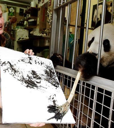 Yang Yang, a panda artista cujas obras estão sendo vendidas a mais de R$ 2 mil cada