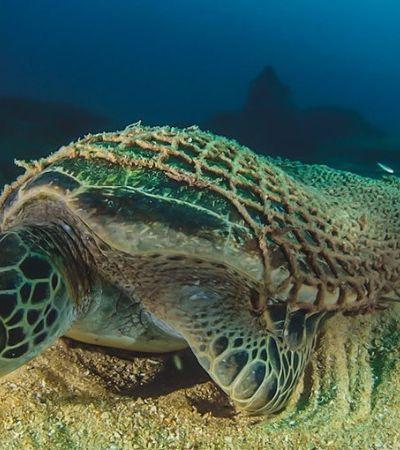Canudos não são maior problema: redes de pesca geram 46% do plástico nos oceanos