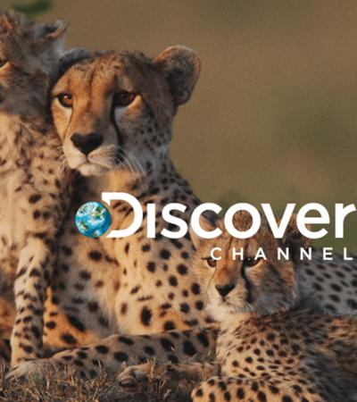 Animado com crescimento, Discovery deve lançar seu próprio serviço de streaming