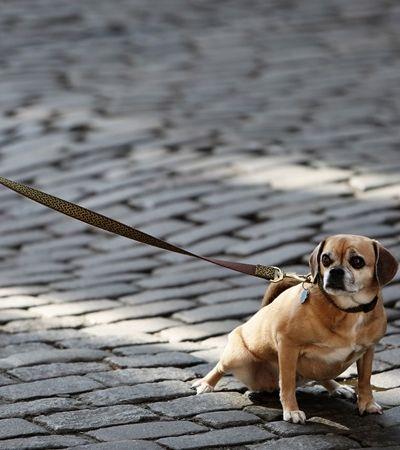 Lei proíbe cachorros de ficarem presos ou acorrentados em Florianópolis