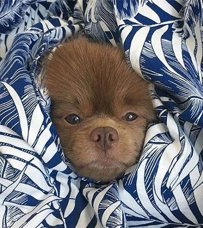 Cãozinho abandonado por ser 'grande demais' tem agora 110 mil seguidores no Instagram