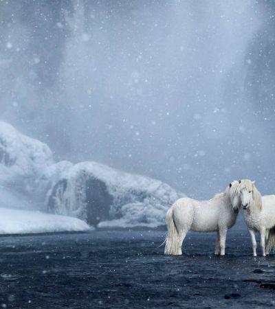 Série de fotos de cavalos da Islândia que mais parecem um conto de fadas
