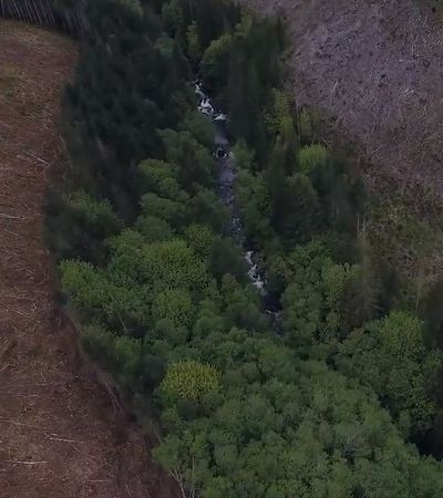 Drones estão ajudando a plantar árvores e monitorar desmatamento