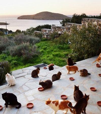 Moradora de ilha grega paradisíaca dá casa e salário para quem cuidar de seus gatos
