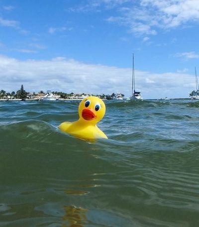 Patinhos de plástico vagando nos oceanos 26 anos após acidente alertam sobre poluição
