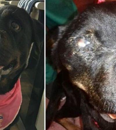 Jovem é proibida de ter pets por 5 anos após animal vítima de maus-tratos perder olho