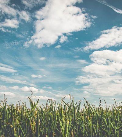Curso online e gratuito da ONU sobre agricultura familiar é inspirado em modelo brasileiro