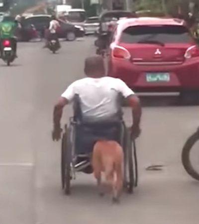 Cachorro empurra cadeira de rodas de tutor que perdeu movimentos em acidente. Veja o vídeo
