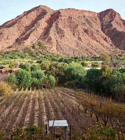 Já ouviu falar dos vinhos da Bolívia? O NYT está querendo que você prove
