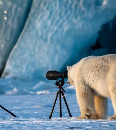 Divirta-se com as eleitas fotografias mais engraçadas do mundo animal