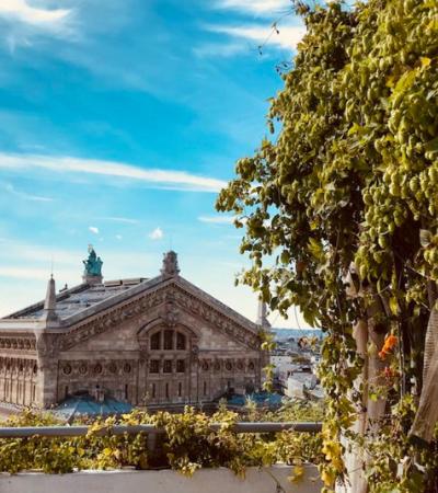 Você pode visitar as incríveis fazendas de orgânico nas coberturas das lojas de departamento em Paris