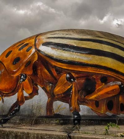 Incríveis insetos 3D são o tema do trabalho deste artista de rua português