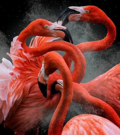 A arte da liberdade: As imagens ganhadoras do prêmio Fotografias de Pássaros 2018 são pura inspiração