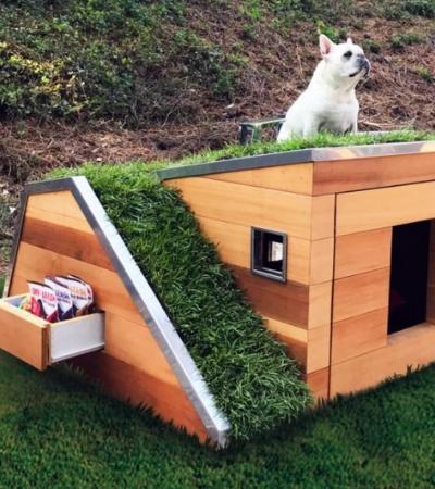 Casinha de cachorro sustentável tem teto verde e ventilador movido a energia solar