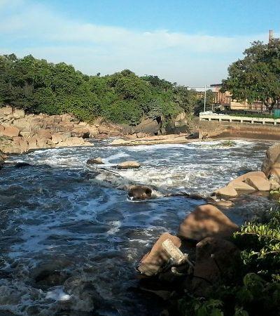 Mancha de poluição do Tietê diminui e animais começam a retornar ao rio
