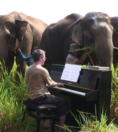 Cansado dos humanos, este pianista passou a tocar para elefantes cegos