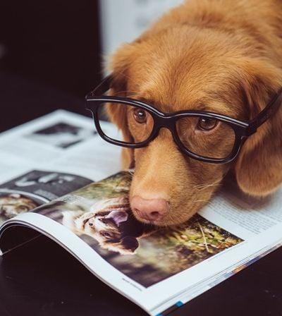 Eu já sabia: Sentimos mais empatia por cachorros do que por pessoas
