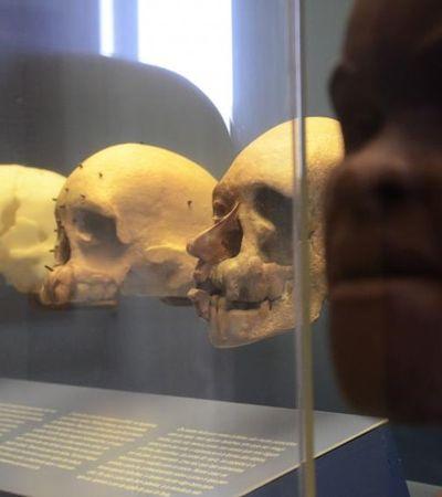 Estudantes de museologia criam rede de coleta de fotos do Museu Nacional