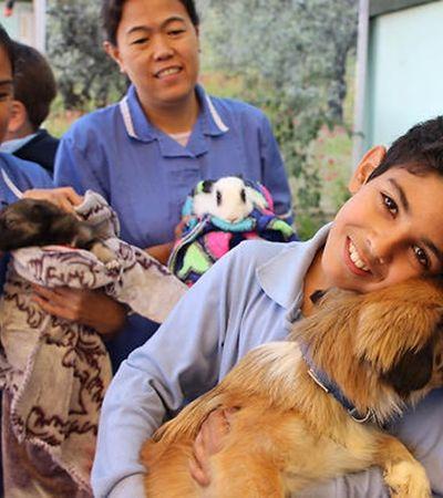 Câmara dos Deputados vai votar PL que autoriza visita de pets em hospitais
