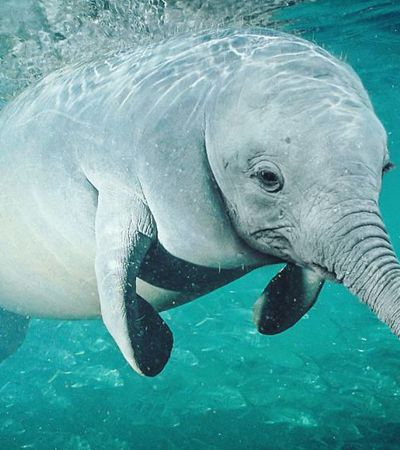 Artista misturas diferentes espécies no Photoshop e cria novos e maravilhosos animais