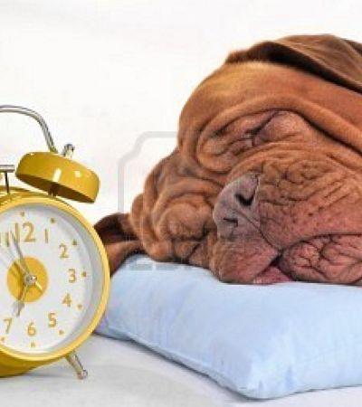 Cães são capazes de contar o tempo. E isso pode ajudar a combater o Alzheimer