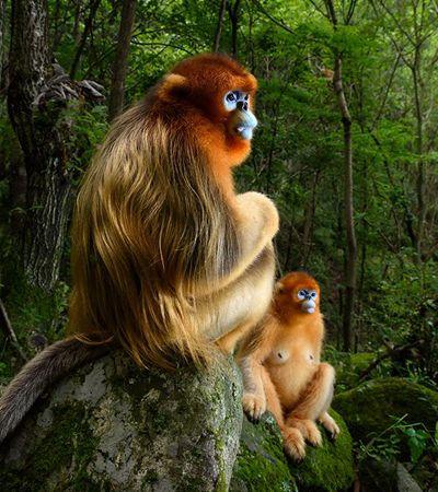 Macacos desconfiados e leopardo reflexivo: Os 10 vencedores do Wildlife Photographer of the Year 2018