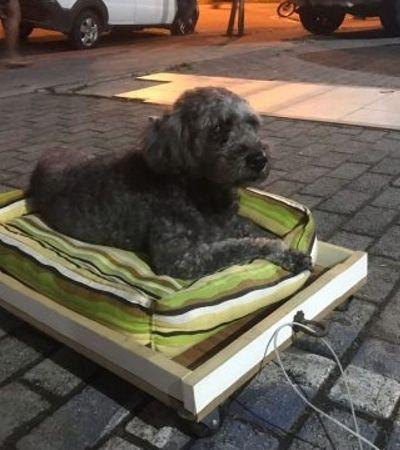Tutora cria um cama-carrinho para poder passear com sua cadelinha de 14 anos