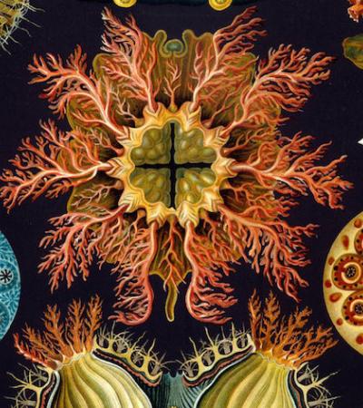 As ilustrações botânicas de antigamente que eram verdadeiras obras de arte