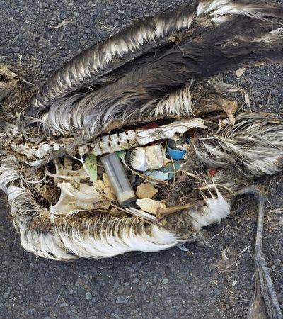 Terra perdeu 60% de seus animais em 44 anos, aponta estudo