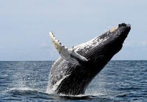 Pesquisadores descobrem mundo oceânico perdido com cadeias vulcânicas de 3 km que orientam rotas de baleias