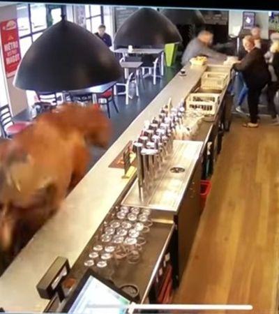 Revolta da natureza #2: cavalo pistola invade bar galopando e bota humanos pra correr