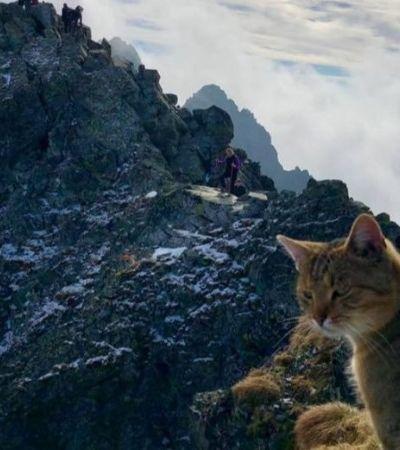 Ele escalou uma montanha de 2.500 metros e encontrou no topo a surpresa mais inesperada