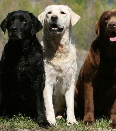 A cor do seu cachorro pode indicar quanto tempo ele vai viver