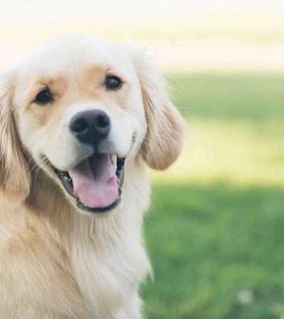 Estas podem ser as imagens de cachorros mais antigas de que se tem notícia