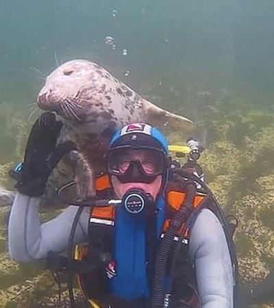 Mergulhador ganha abraço inesperado de foca em vídeo repleto de amor