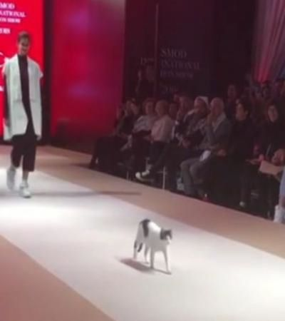 Maravilhoso é ele! Este gato invadiu a passarela durante semana de moda