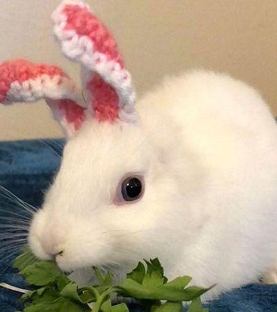 Este coelhinho nasceu sem orelhas mas sua dona encontrou a melhor solução