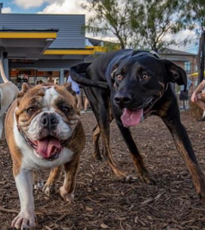Restaurante pagará cerca de R$ 370 por hora para quem brincar e passear com cães