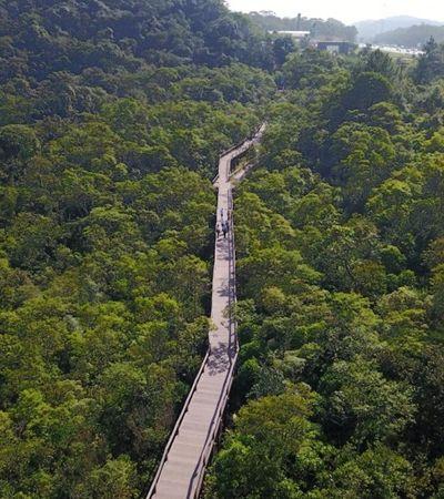 São Paulo vai ganhar parque ecológico no meio da Mata Atlântica