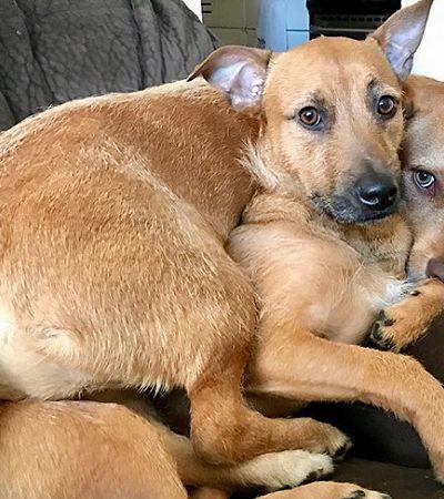Este cão achou um sósia a caminho do mercado e convenceu sua dona a adotá-lo também