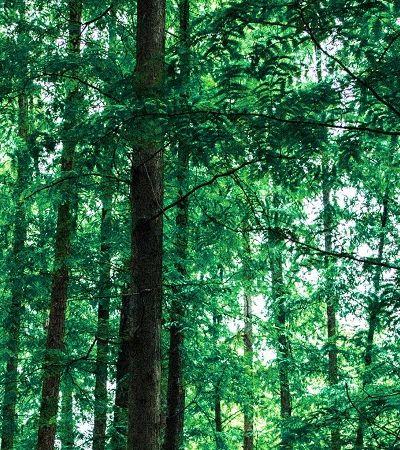 ONGs se organizam para impedir extinção de 11 Unidades de Conservação em Rondônia