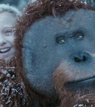 Campanha do Instituto Vida Livre lembra qual é o verdadeiro Planeta dos Macacos