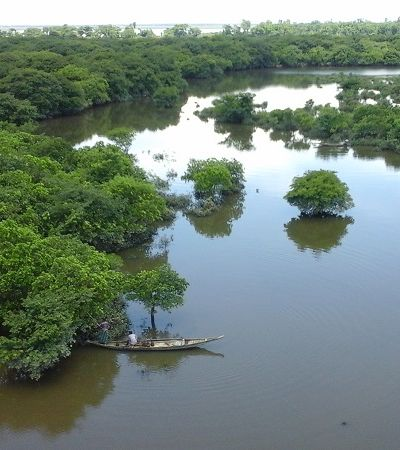Áreas úmidas do planeta estão desaparecendo três vezes mais rápido que florestas e isso é preocupante